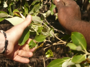 Learning how to find bush tucker
