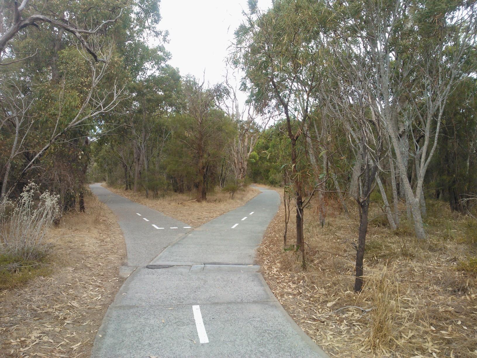 Fork in pathway - Kings Park